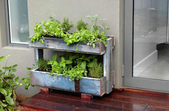 A completed herb planter built from a recycled pallet, containing several herb plants, positioned on a deck outside