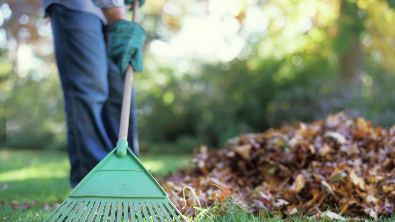 A person raking leaves into a pile on an area of grass
