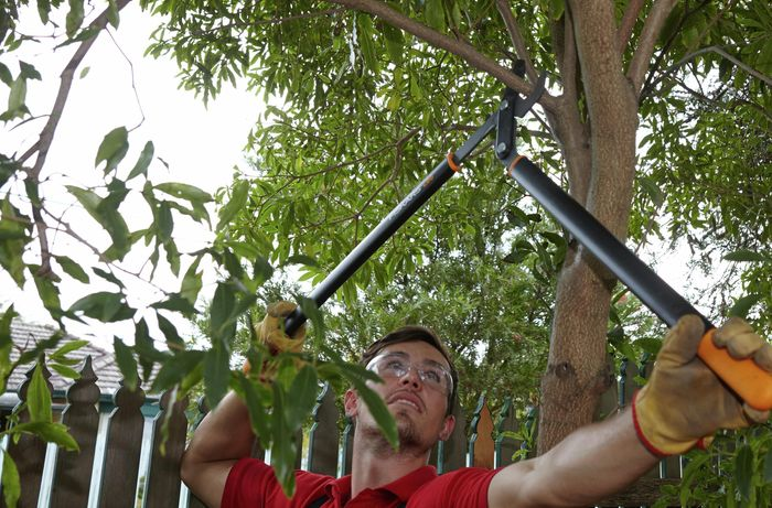 Person wearing safety glasses and gloves to prune a large twig off a tree.