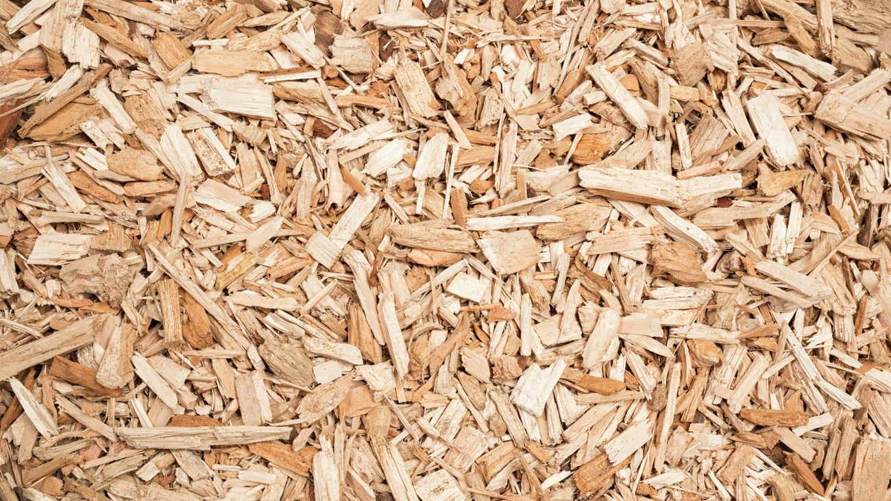 Wood chips used as mulch.