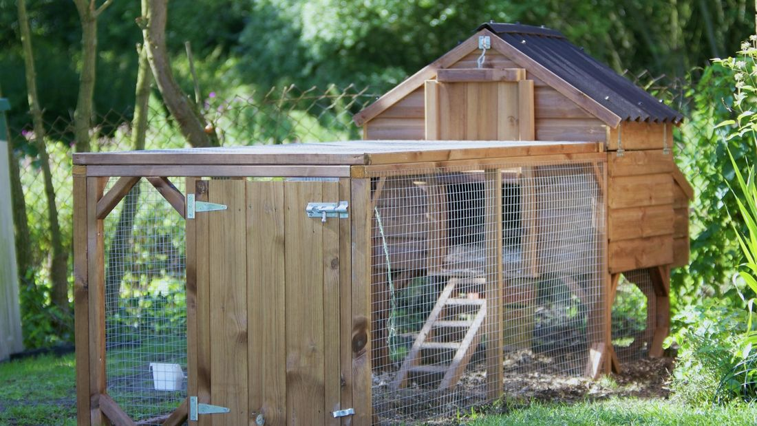 DIY Advice Image - What to consider for your very own chicken coop . G Drive blob storage upload.