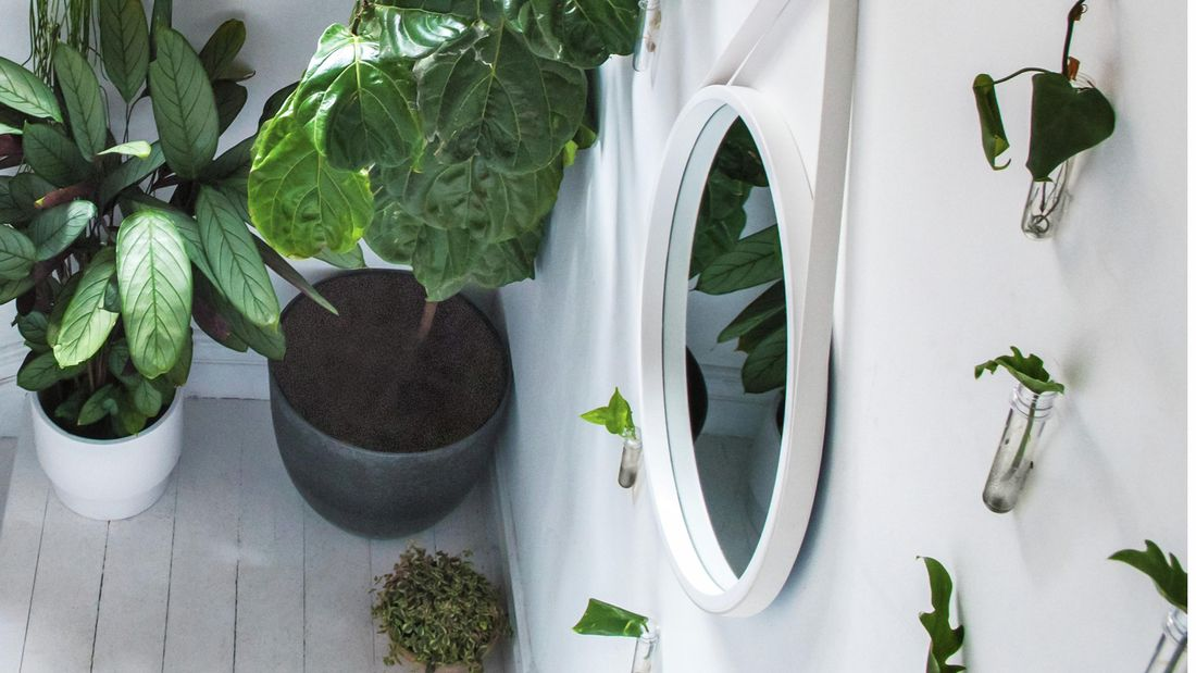 Plants in test tube planters on a white wall with two bigger plants on the ground.