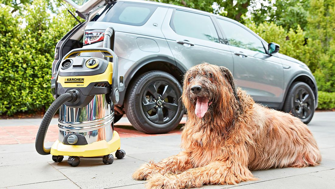 Close up of a dog sitting down next to a Karcher vacuum cleaner and a car with an open boot in the background