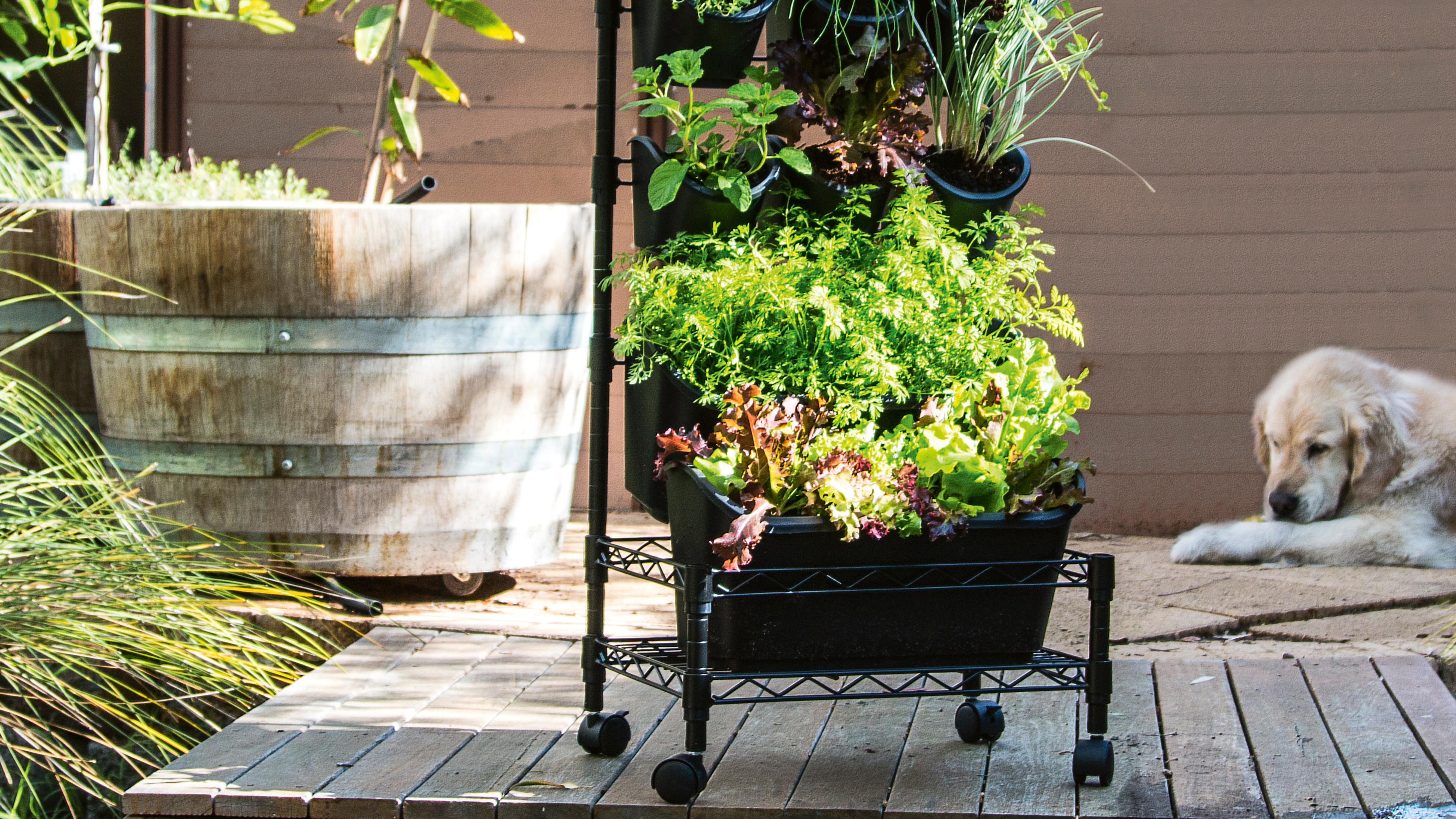 Holman 'Green Wall' mobile vertical garden
