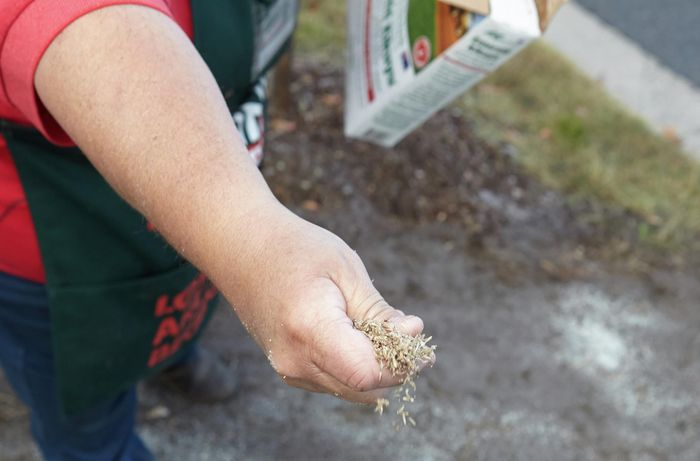 A person sowing lawn seed by hand