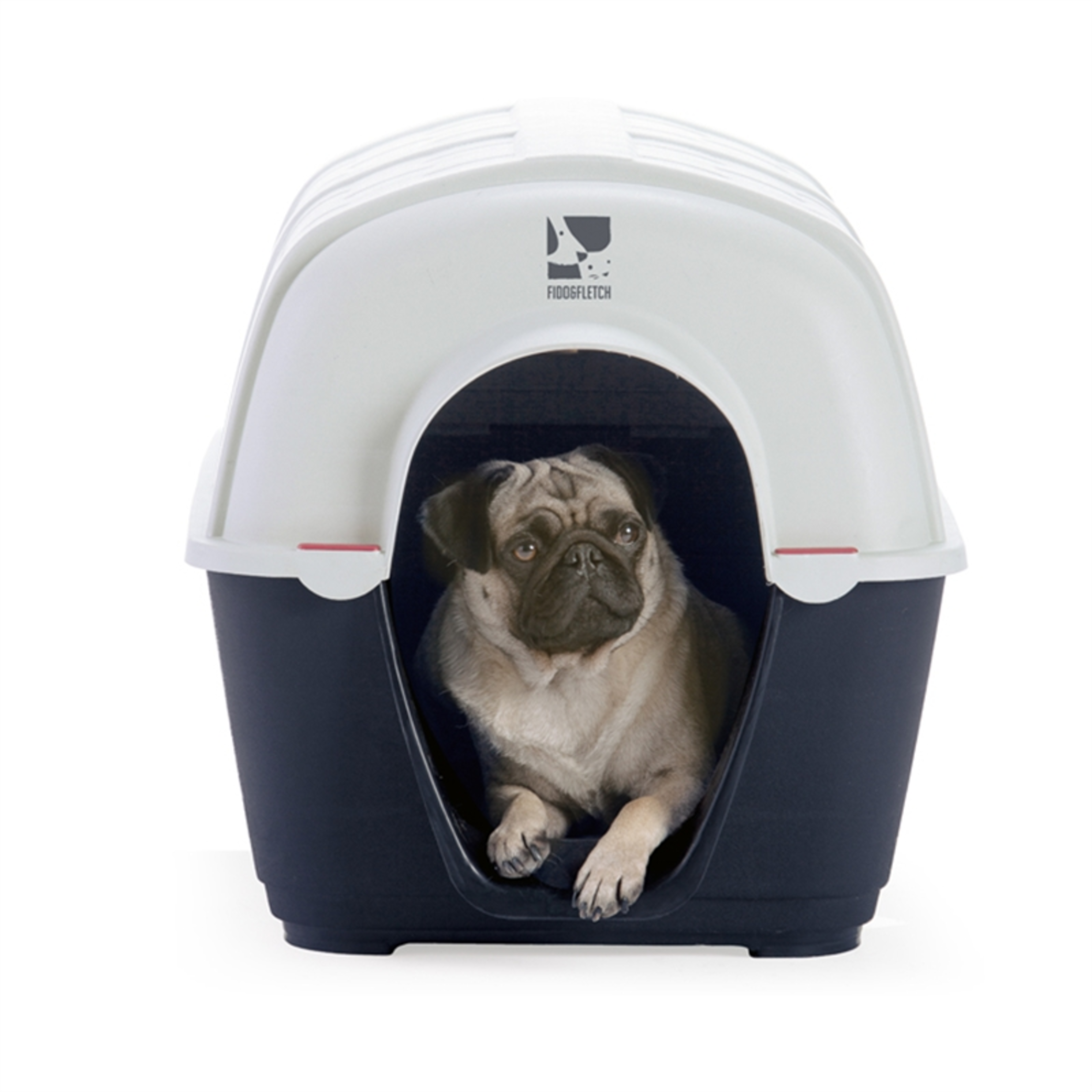 Small dog in portable plastic kennel