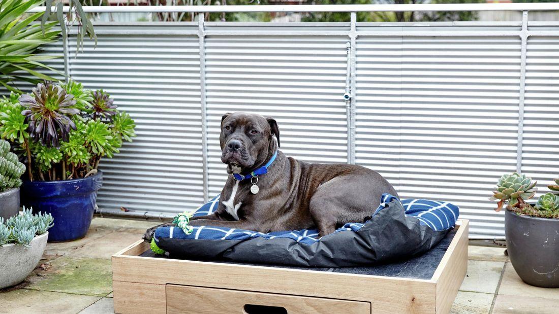 DIY Step Image - How to make a D.I.Y. dog bed . Blob storage upload.