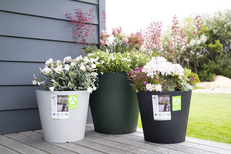 Flowers in pot plants on a timber deck