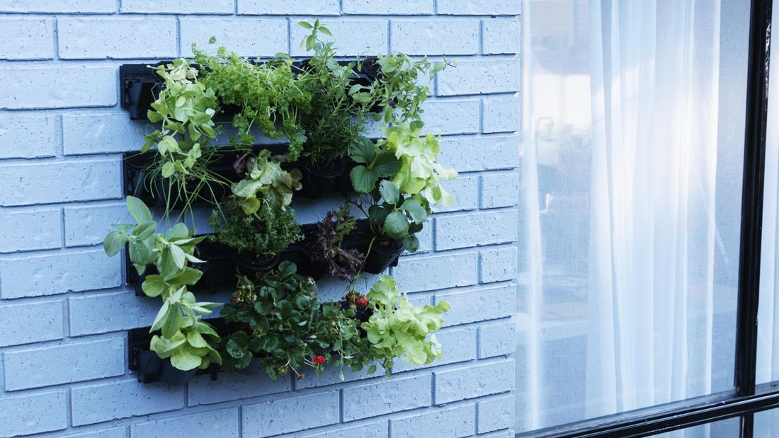 Four rows of planters mounted into a blue painted brick wall