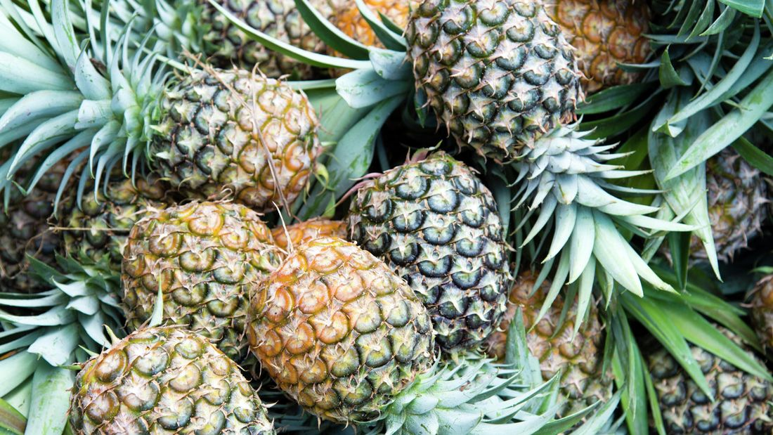Wide shot of ripe picked pineapples