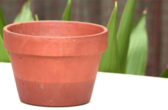 A flowerpot on a table