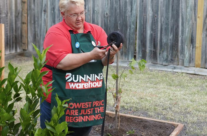 A Bunnings team member cutting lengths of fabric ties for securing young trees to a stake