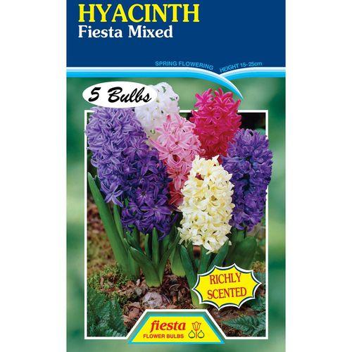 Fiesta Flower Bulbs Hyacinth Mixed Colours - 5 Bulbs