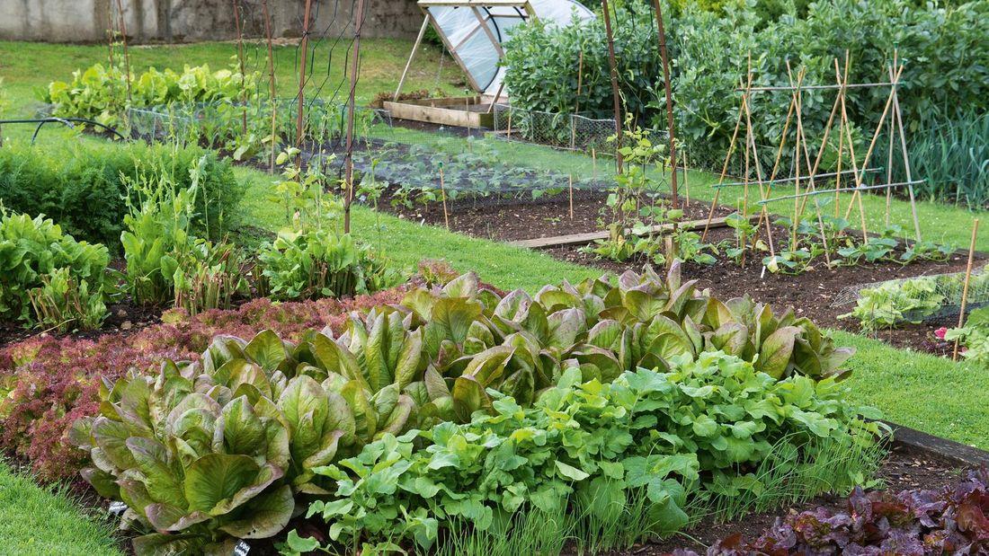 Outdoor garden beds with assorted vegetable