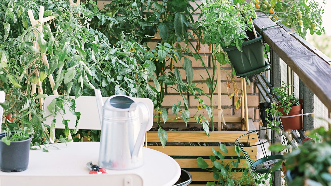 Tomato plants and various other vegies are being brown in small pots on a balcony