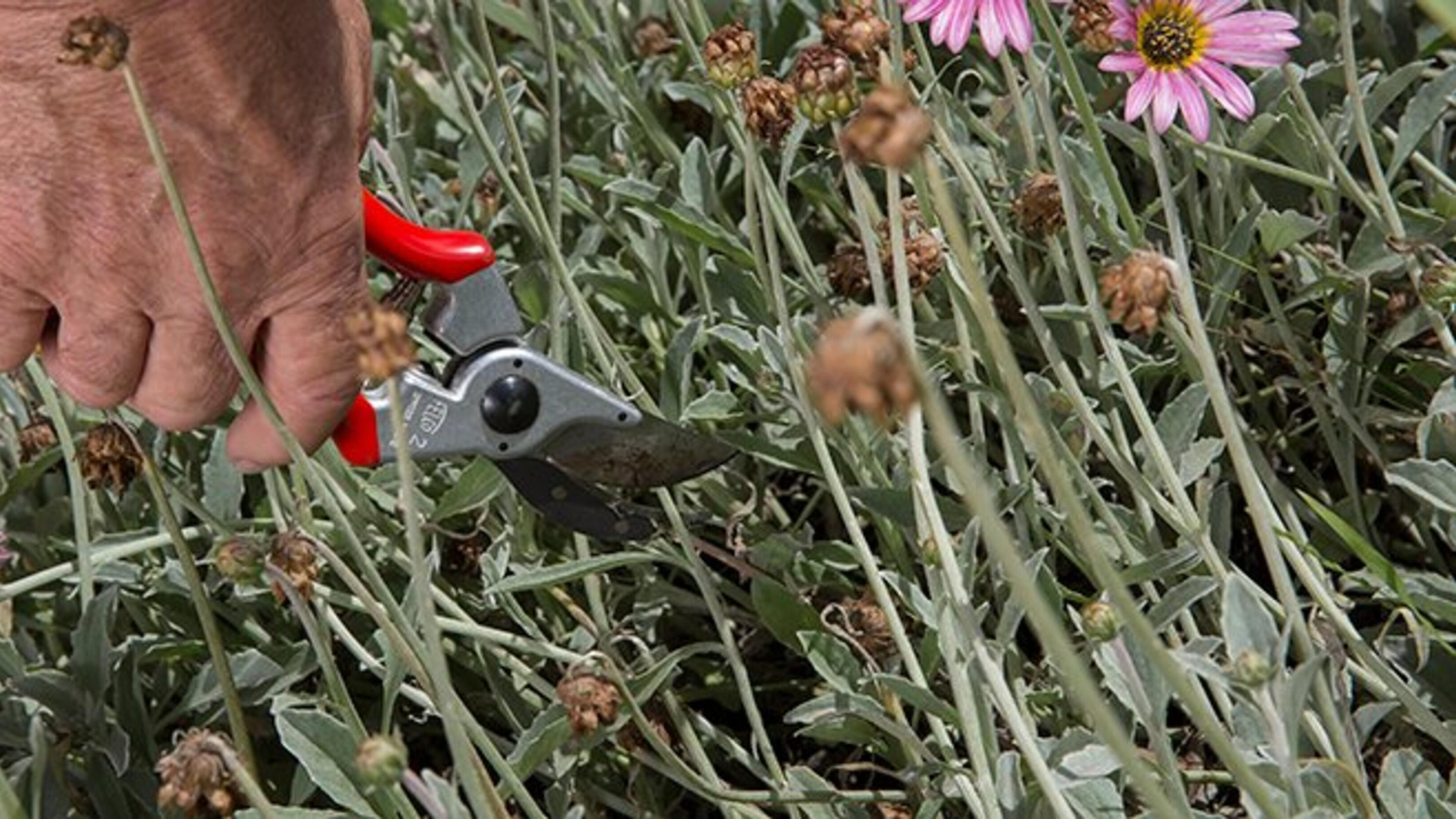 Person pruning plants.