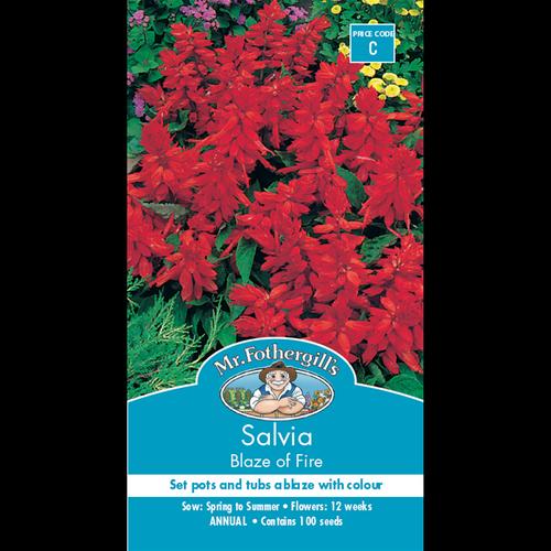 Mr Fothergill's Blaze Of Fire Salvia Flower Seeds