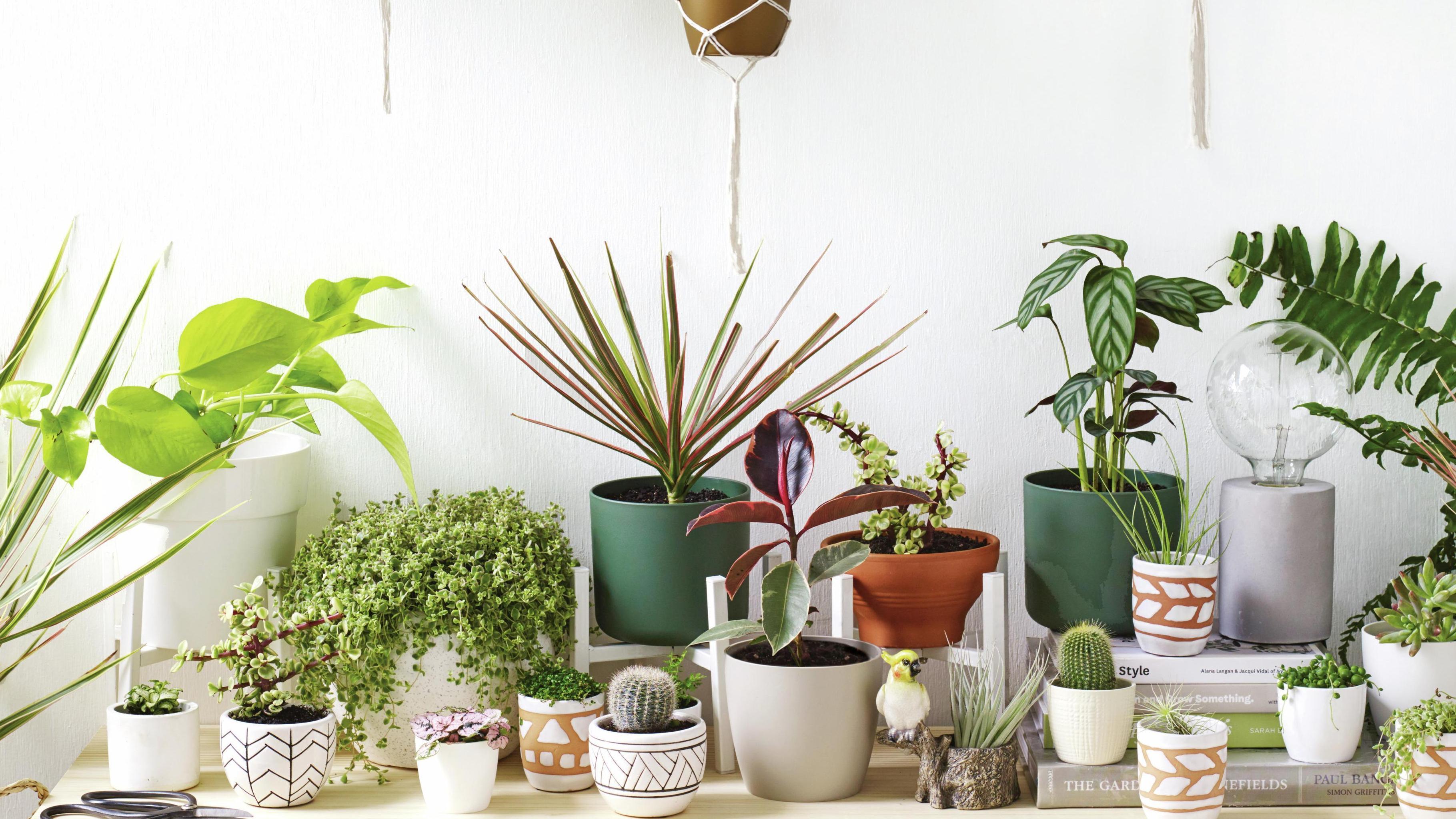 Numerous pot plants on a bench.
