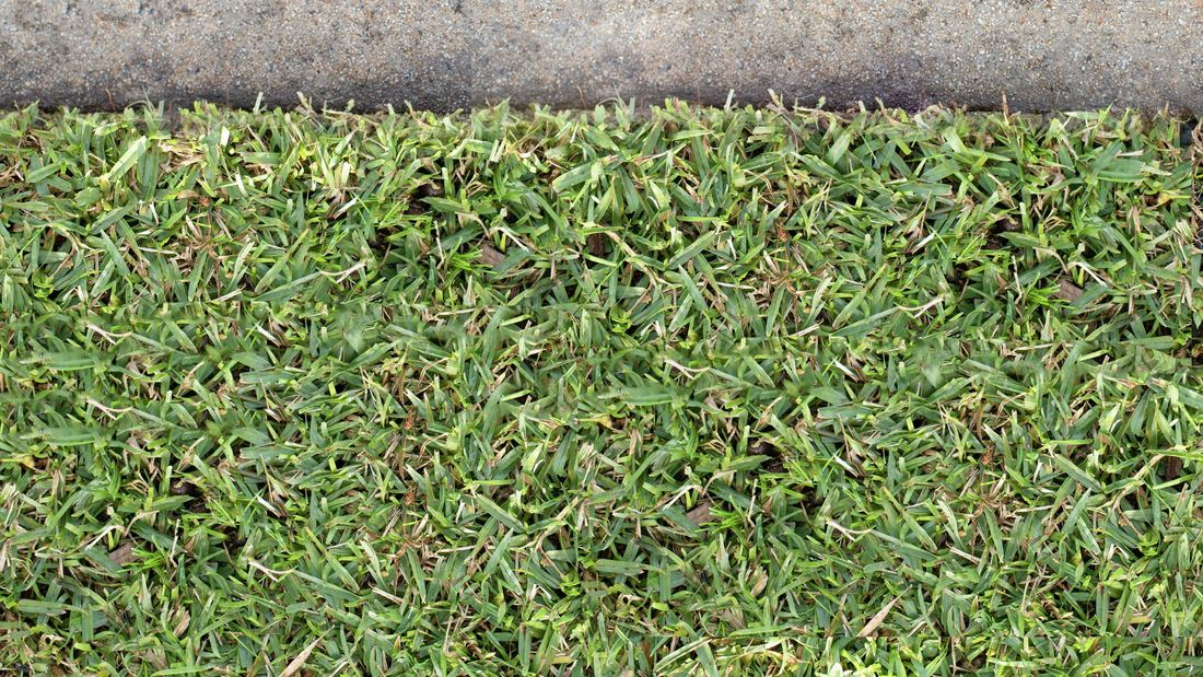 Grass growing next to cement path.