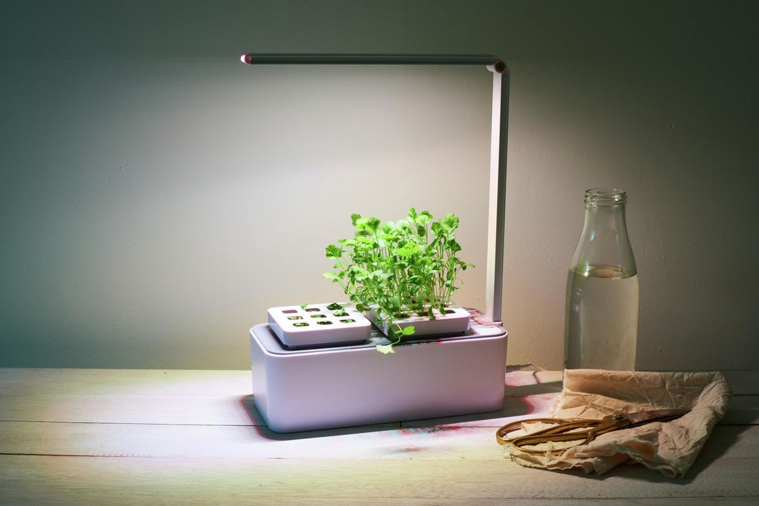 Small plants growing out of a plastic container with attached overhead light next to a bottle of water