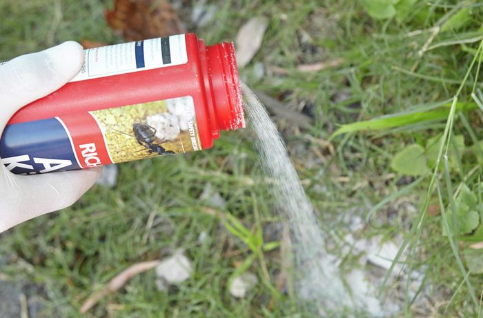 Person pouring ant killer granules onto a grassed area