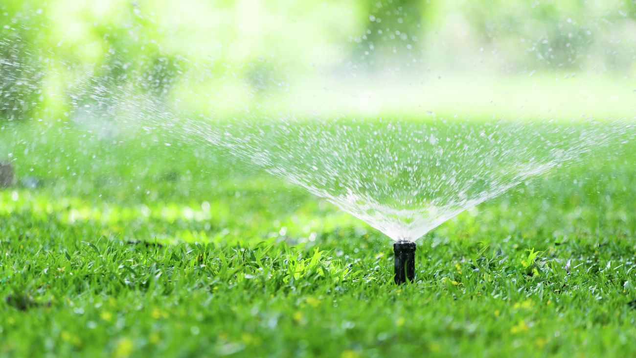 Watering spraying from a pop-up sprinkler in a green lawn