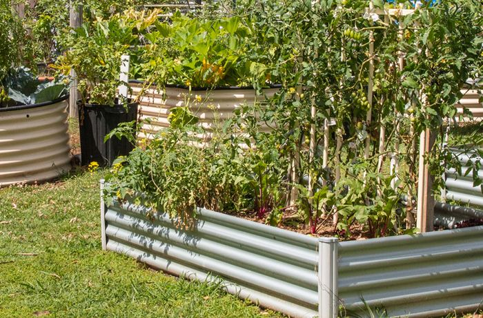 Several raised garden beds with a variety of vegies and plants