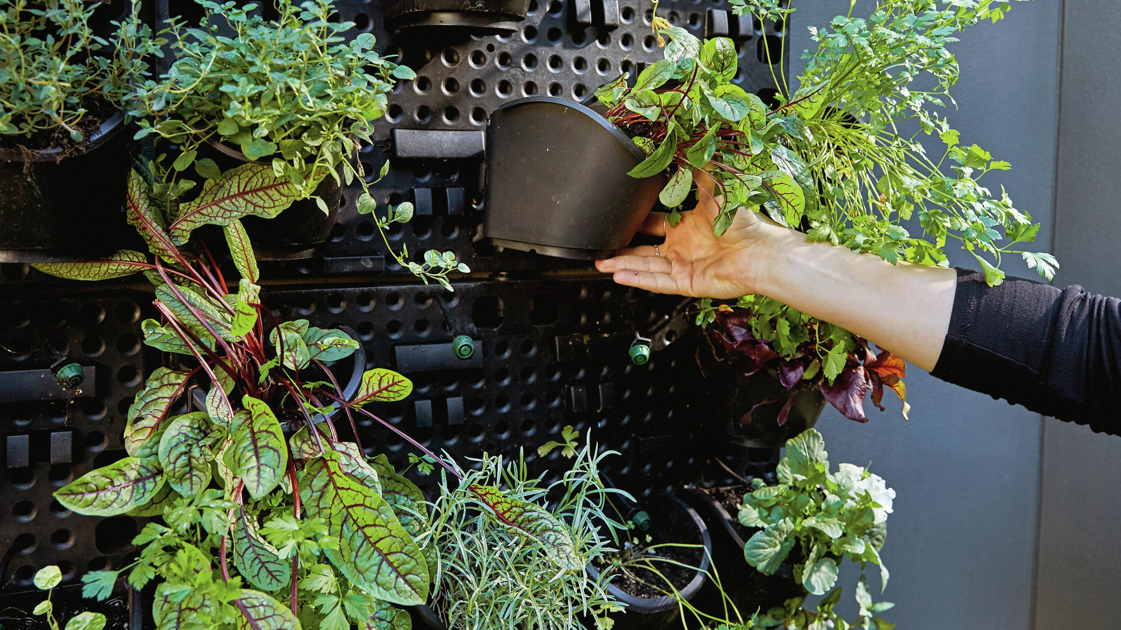 Close up vertical garden with a person putting another pot plant on it.