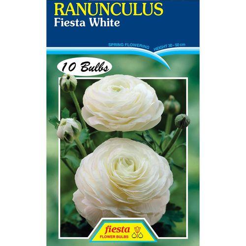 White Ranunculus Bulb - 10 Pack