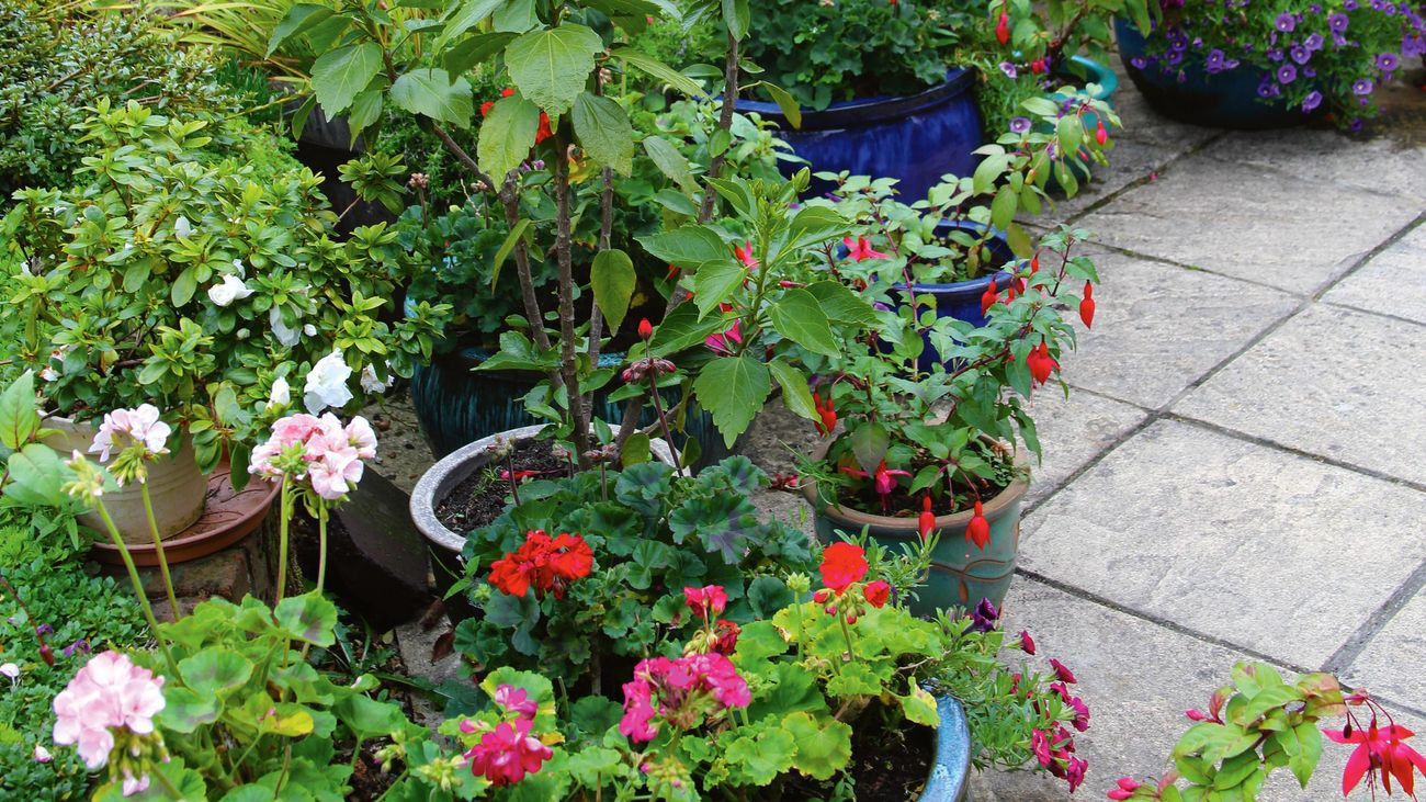 A patio filled with bright flowers in pots