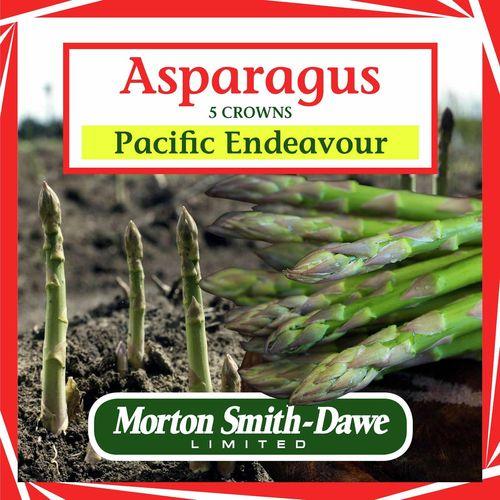 Morton Smith-Dawe 5 Crowns Asparagus Pacific Endeavour Seeds