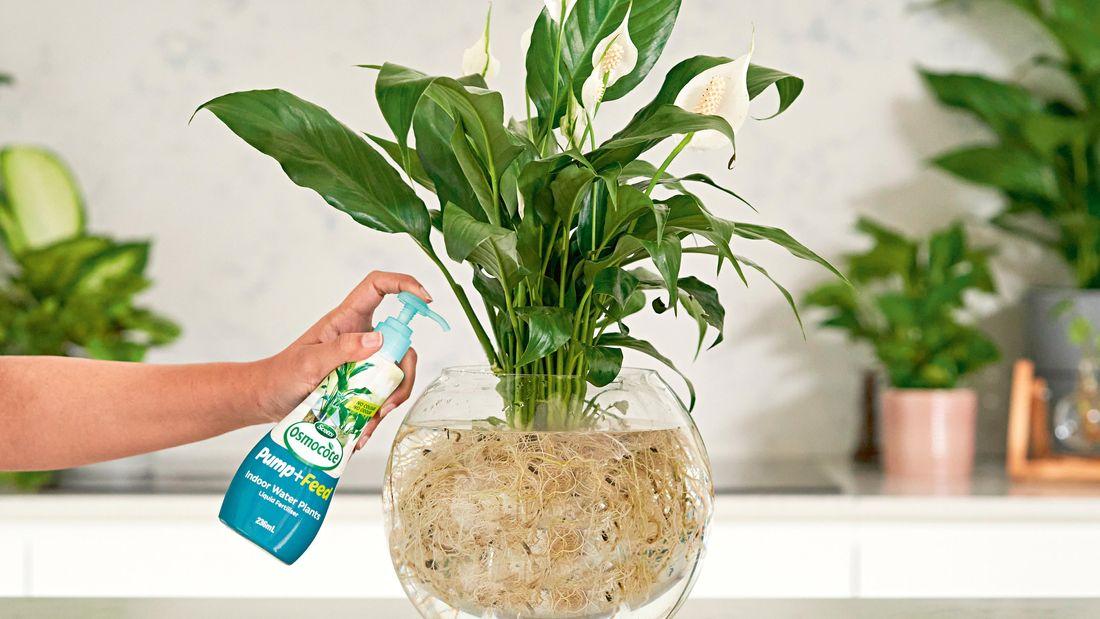 A hand pumps fertiliser into a water plant bowl