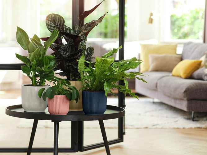 elho Vibes Collection Indoor Pots
