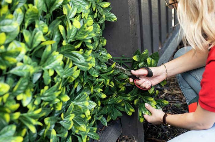 Person trimming artificial hedge.