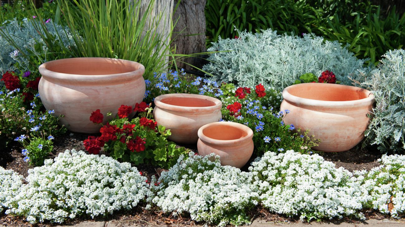 Tuscan Path pots sitting in a garden bed amongst flowers.