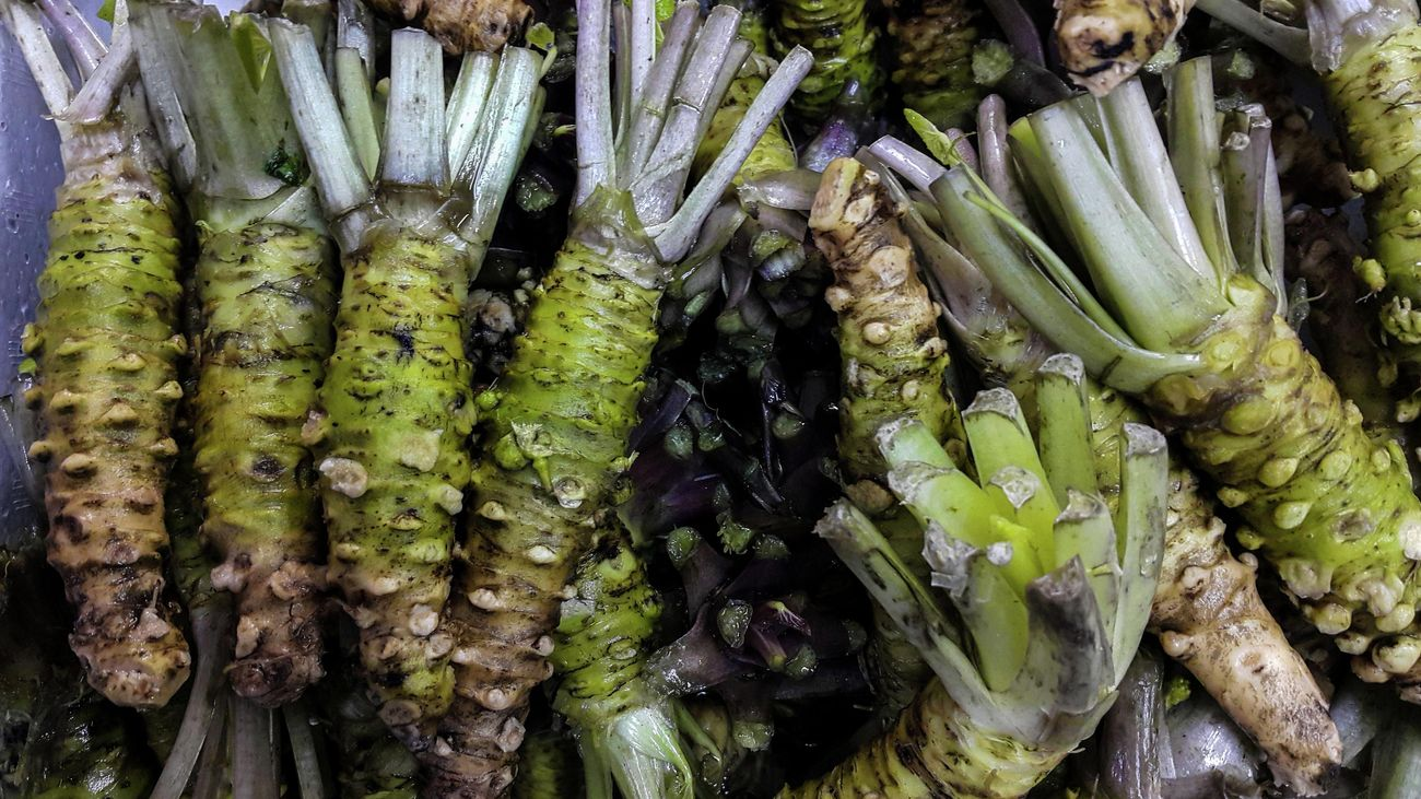 A bunch of harvested and washed green wasabi roots